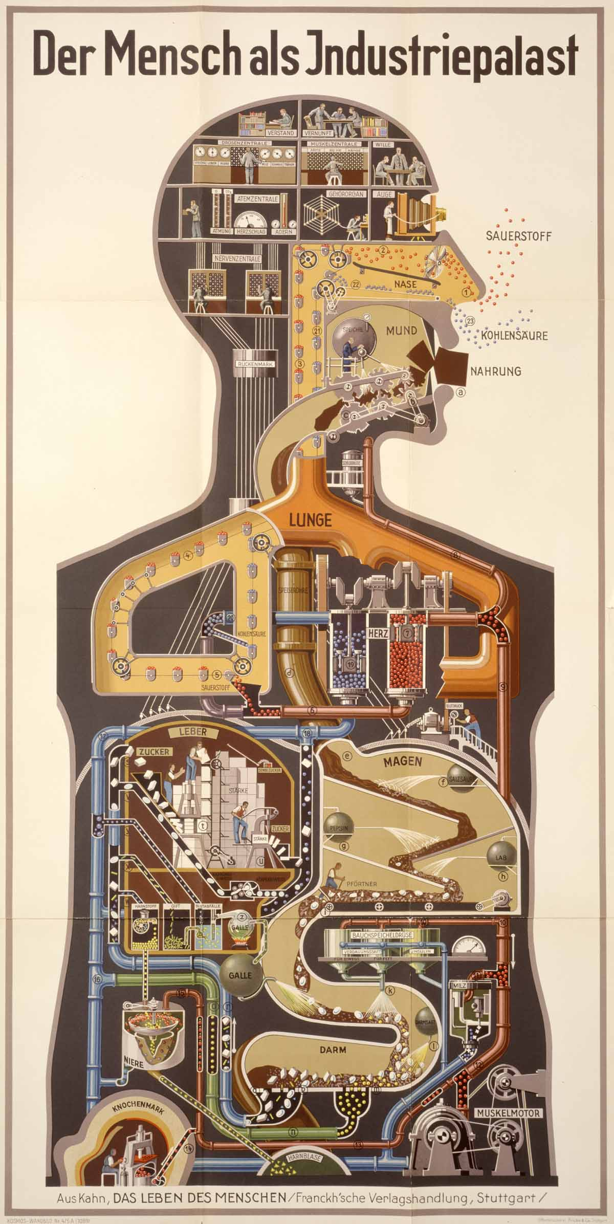 "Fritz Kahn: ""Man as Industrial Palace"" (1927)"